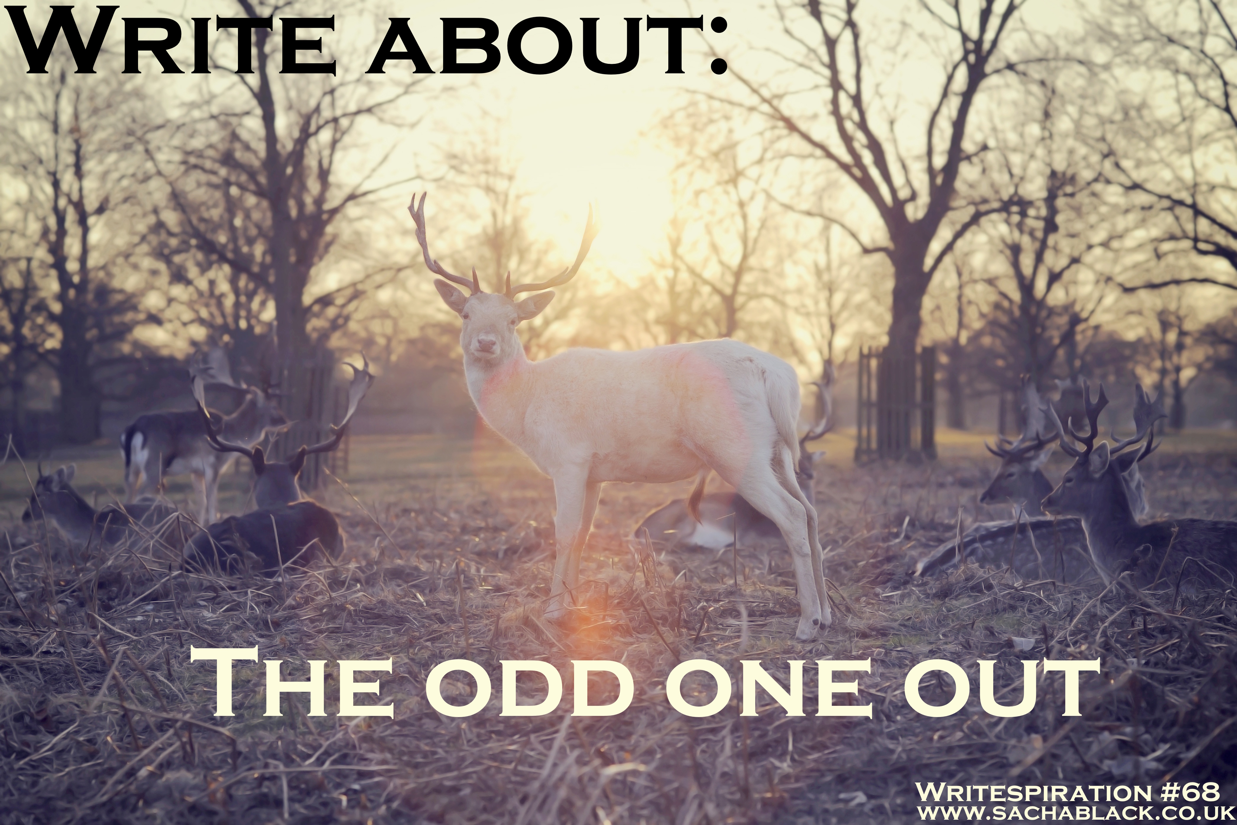 The Odd One Out by Britta Teckentrup — Reviews, Discussion ... |Hampsters The Odd Ones Out